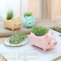 猪子栽培创意植物手工迷你盆栽 儿童DIY卧室办公室盆栽 多色可选