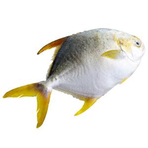 【广东特产】国联水产 冷冻金鲳鱼 700g 2条 袋装
