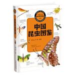 中国之美 自然生态图鉴 中国昆虫图鉴