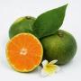 汇橙 江西赣南特产 寻乌蜜桔 新鲜采摘 青皮柑橘丑橘  蜜橘 桔子 地标水果 5斤装