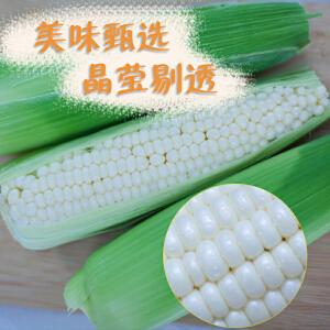 【章贡赣南特产馆】玉米 水果玉米 生吃玉米 新鲜玉米 牛奶水果玉米 非转基因 即食