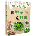 识野菜  吃野菜(汉竹)